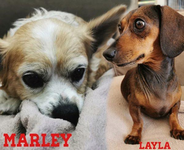 Layla & Marley