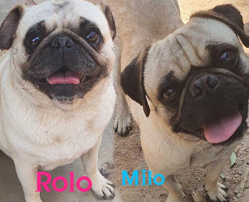 Milo and Rolo